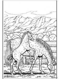 Жеребенок с лошадью