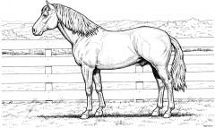 Спокойная лошадка
