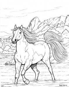 Лошадь бегущая по воде