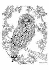 Раскраска антистресс сова на ветке