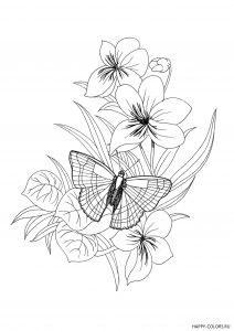babochka-na-cvetke-raskraska-raspechatat-format-A4