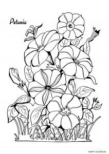 cvety-petuniya-raskraska-antistress-raspechatat-format-A4