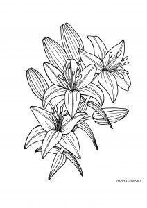 Три цветка с бутонами