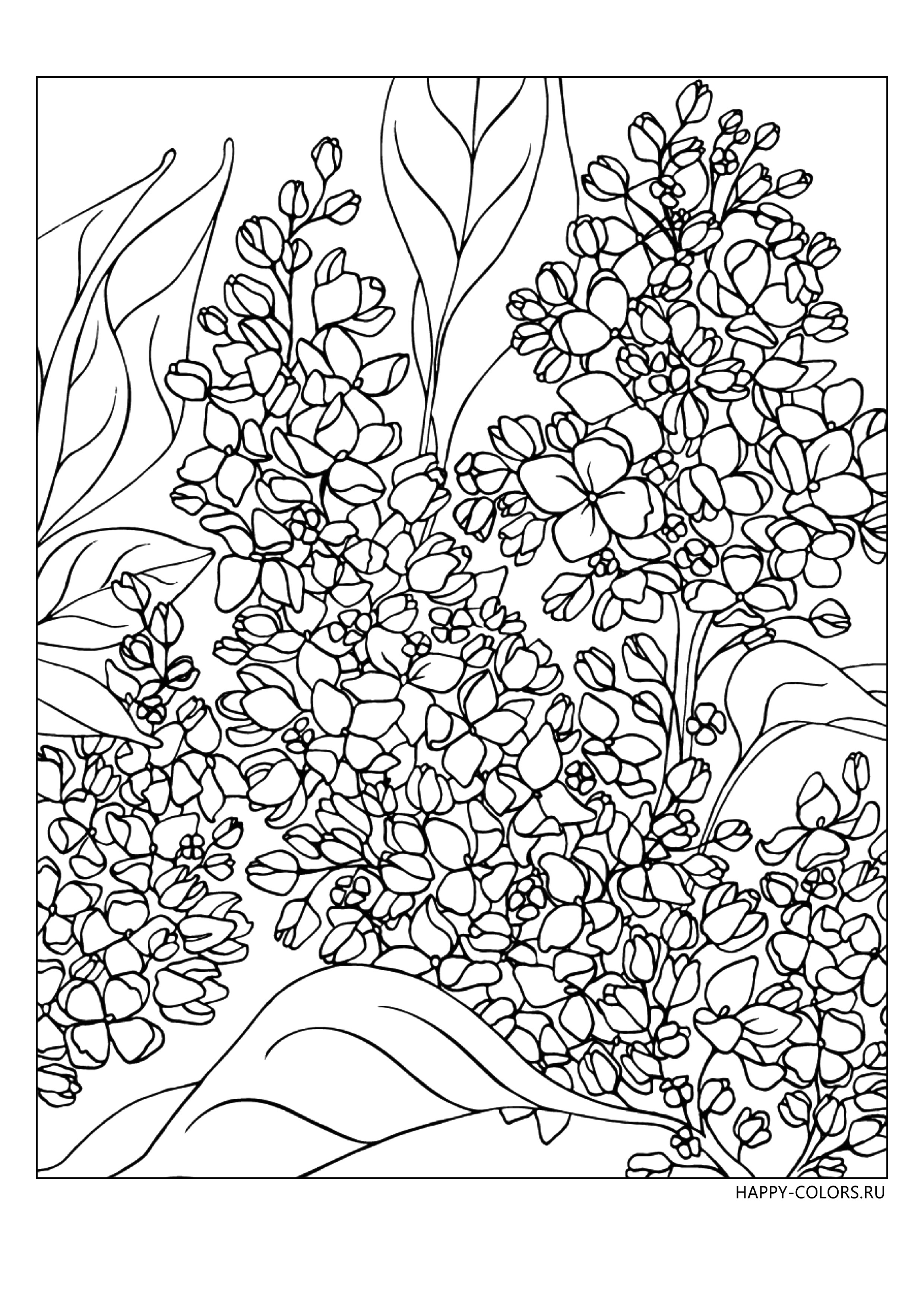Раскраски Цветы Антистресс - распечатать бесплатно в ...